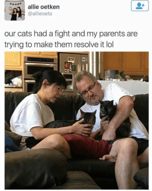 Family has to stick together: allie oetkern  @allieoets  our cats had a fight and my parents are  trying to make them resolve it lol Family has to stick together