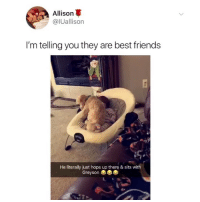 Friends, Love, and Memes: Allison  @lUallison  I'm telling you they are best friends  He literally just hops up there & sits with  Greyson  4s I love @scoobydoofruitsnacks account🤠💅🏼