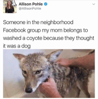 What a good boy @animalsdoingthings: Allison Pohle  @AllisonPohle  Someone in the neighborhood  Facebook group my mom belongs to  washed a coyote because they thought  it was a dog What a good boy @animalsdoingthings