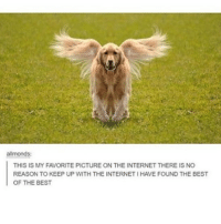 Internet, Memes, and Best: allmonds:  THIS IS MY FAVORITE PICTURE ON THE INTERNET THERE IS NO  REASON TO KEEP UP WITH THE INTERNET I HAVE FOUND THE BEST  OF THE BEST !!!