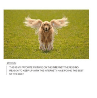 Internet, Memes, and Best: allmonds:  THIS IS MY FAVORITE PICTURE ON THE INTERNET THERE IS NO  REASON TO KEEP UP WITH THE INTERNET IHAVE FOUND THE BEST  OF THE BEST i want flying doggo