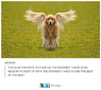 Dank, Internet, and Best: allmonds  THIS IS MY FAVORITE PICTURE ON THE INTERNET THERE IS NO  REASON TO KEEP UP WITH THE INTERNET I HAVE FOUND THE BEST  OF THE BEST  Postize