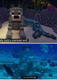 Apparently, Minecraft, and Tumblr: ally build a mermaid wolf.   the wolf-mermaid, wakasagayhime: so apparently Minecraft did this thing where people submitted their own builds to be made into steel structures that would be used to regrow coral in coral reefs, and one of the ones that got selected is a fishwolf, so now there is an actual physical minecraft wolf mermaid hybrid at the bottom of the ocean saving the coral reefs and i am living (full video here btw)