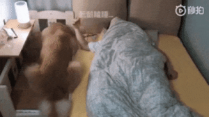 "almost-dead-freak: thenatsdorf: ""It's not about the bed, it's about being next to you.""  I'm gonna cry  : almost-dead-freak: thenatsdorf: ""It's not about the bed, it's about being next to you.""  I'm gonna cry"