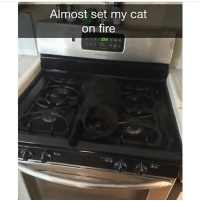 Follow @hilarious.ted for the funniest animal memes!!: Almost set my cat  on fire Follow @hilarious.ted for the funniest animal memes!!