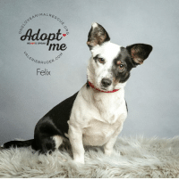 ALRESCU  NEANIMA  Adopt  me  HEARTS SPEAK  BRUDER.C  Felix Oh the cuteness of Felix!  Contact One Love Animal Rescue for details.
