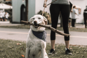"""ALS Walk 2019.. """"please take photos of the humans"""" Me: of course of course .. **dog walks by**: ALS Walk 2019.. """"please take photos of the humans"""" Me: of course of course .. **dog walks by**"""