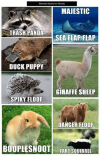 9edcb994 Animals, Memes, and Puppies: Alternate Names for Animals MAJESTIC TRASH  PANDA SEA FLAP