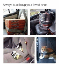 Memes, Buckle, and Fish: Always buckle up your loved ones  HON READY  HOT-N READY  HOTN READY Late night PSAs with your 15th favourite fish