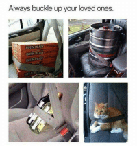 "Kitties, Memes, and Buckle: Always buckle up your loved ones.  HOT N READY  N READY  HOT HOTAN READV Ok, I laughed then that voice in my head said ""the kitty should be carrier"" because I am crazy that way"