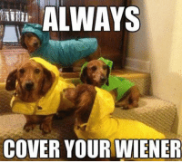Memes, 🤖, and Wieners: ALWAYS  COVER YOUR WIENER Very important advice