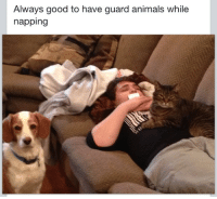 cumsockmonkey:  cumsockmonkey:  My mom's Facebook posts about me are flawless  hi hello yes please sTOP GIVING THIS NOTES: Always good to have guard animals while  napping cumsockmonkey:  cumsockmonkey:  My mom's Facebook posts about me are flawless  hi hello yes please sTOP GIVING THIS NOTES