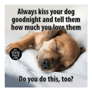 Love, Memes, and Kiss: Always kiss your dog  goodnight and tell them  how much you love them  BY  Shake  Paws  .Com  Do you do this, too? I always do.