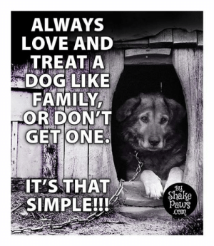 Yes, it's that simple: ALWAYS  LOVE AND  TREAT A  DOG LIKE  FAMILY  OR DON'T  GET ONE  IT'S THAT  SIMPLE!!!  By  Shake  Paws  .Com Yes, it's that simple