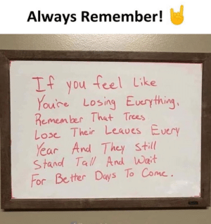 Always Remember!: Always Remember!  If  feel Like  you  Youre Losing Euerything  Remem ber That Trees  Lose Their Leaves Every  Year And They still  Stand Tall And Wait  For Better Day's To Come Always Remember!