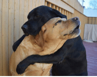 Always there for you fren (x-post /r/rarepuppers): Always there for you fren (x-post /r/rarepuppers)