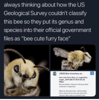 "Cute, Argentina, and Science: always thinking about how the US  Geological Survey couldn't classify  this bee so they put its genus and  species into their official government  files as ""bee cute furry face""  USGS Bee Inventory an..  bee cute furry face, m, argentina,  angle_2014-08-07-18.11.05 ZS  PMax  Mourecotelles, Unknown Hairyeye Bee,  collected in Argentina  What an attractive bee, unfortunately  that is about all we can say about this  species other than it is found in the Science is wholesome"