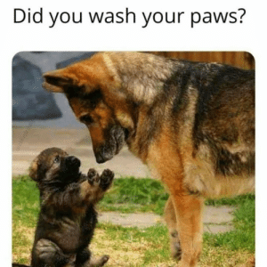Always wash your hands: Always wash your hands