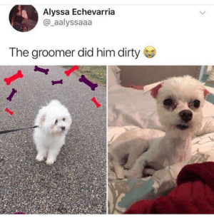 Alyssa Echevarria the Groomer Did Him Dirty if I Was a