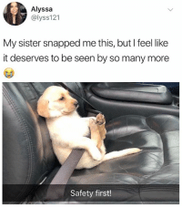 Memes, British, and Dog: Alyssa  @lyss121  My sister snapped me this, but I feel like  it deserves to be seen by so many more  Safety first! Dog memes are my favourite 😍
