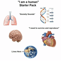 "Memes, Anxiety, and Starter Pack: "" am a human""  Starter Pack  DNA  NITROGENOUS  BASES  Anxiety Sounds  ""I need to survive and reproduce  Lives Here -> Too real"