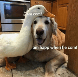 Friends, Wholesome, and When: am comf  am happ when he comf Wholesome friends