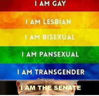 Transgender, Lesbian, and Time: AM GAY  I AM LESBIAN  IAM BISEXUAL  IAM PANSEXUAL  AM TRANSGENDER  I AM THE SENATE  @denchexe <p>long time ago in a galaxy far far away</p>