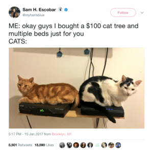 Anaconda, Be Like, and Cats: am H. Escobar>  Follow  @myhairisblue  ME: okay guys I bought a $100 cat tree and  multiple beds just for you  CATS:  5:17 PM -15 Jan 2017 from Brooklyn, NY  0匎@㊨貝  0  5,501 Retweets 15,590 Likes It do be like that