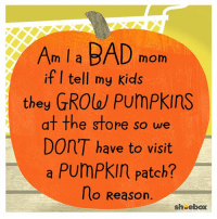 Asking for a friend...: Am I a BAD mom  if I tell my kids  they GROW Pumpkins  at the store so we  Don'T have to visit  a Pumpkin Patch?  lo Reason  sheebox Asking for a friend...