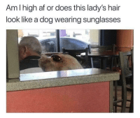 Af, Hair, and Sunglasses: Am I high af or does this lady's hair  look like a dog wearing sunglasses  2 woof