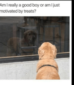Good, Boy, and Really: Am I really a good boy or am I just  motivated by treats? Motivated by treats