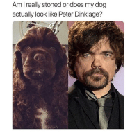 Dm to 10 friends for a shoutout: Am I really stoned or does my dog  actually look like Peter Dinklage? Dm to 10 friends for a shoutout
