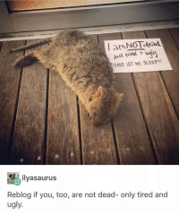 Ugly, Sleep, and MeIRL: am No dead  just tired u  PLEASE LET ME SLEEP!  ilyasaurus  Reblog if you, too, are not dead- only tired and  ugly Meirl