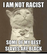 How I feel getting most of my karma from here.: AM NOT RACIST  SOMEOF MY BEST  ARE BLACK  kmeme com How I feel getting most of my karma from here.