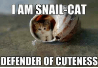 Awwwww!! =^~^= <3 D: AM SNAIL-CAT  DEFENDER OF CUTENESS Awwwww!! =^~^= <3 D