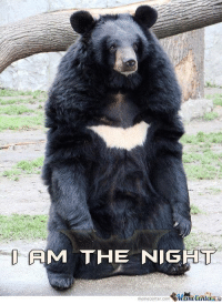 Bat Bear!: AM THE NIGHT  memecenter-com Bat Bear!