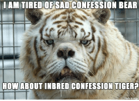 Confession Bear: AM TIRED OF SAD CONFESSION BEAR  HOW ABOUT INBRED CONFESSION TIGER  made on imgur