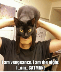 Grumpy Cat, Catman, and I Am the Night: am vengeance, I am the night.  I...am...CATMAN!