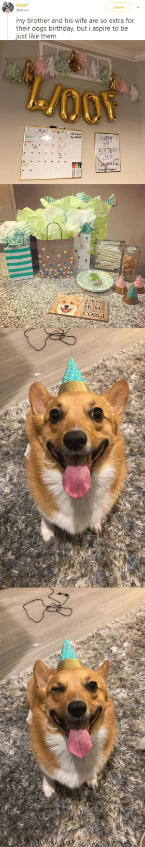 dailytweets: IS NO ONE PAYING ATTENTION TO THE FACT THAT THE FLOOF IS WINKING.  WINKING. HE IS AN ANGEL. [x] : amar  Follow  @atlosci  my brother and his wife are so extra for  their dogs birthday, but i aspire to be  just like them   DAY  11's 12r  Tax's  Party  BIRTHDY  br. Apt  1 30  1b 17 9  리  PAY  DAY!  22 2s 26 27  Earth  Dey  ZI  30   A HOUSE  HOME  CORGI  WITHOUT A dailytweets: IS NO ONE PAYING ATTENTION TO THE FACT THAT THE FLOOF IS WINKING.  WINKING. HE IS AN ANGEL. [x]