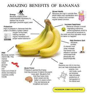 Remember to eat your bananas <3: AMAZING BENEFITS OF BANANAS  Bowel Health  Bananas are high in soluble fiber  which helps stop constipation and  helps to restore and maintain  regular bowel function  Energy  Bananas supply proper  carbohydrates necessary to  replace the muscle  glycogen (muscle sugar) used  a  Increase happiness  Bananas release a mood  Potassium  regulating substance  called tryptophan which is  converted to serotonin in  High in potassium, bananas help the  body's circulatory system deliver  Oxygen to the brain,  helping maintain  regular heartbeat and  proper water balance in  the brain and thus elevates mood  к  & makes us happier!  Potassium  Help Smokers Quit  Bananas  contain  B vitamins and  other minerals  that lessen the  effects of nicotine  withdrawal both  physically and  psychologically  PMS  Bananas contain  vitamin B6. This  vitamin  regulates  blood  Iron  glucose  levels  Bananas are rich in iron too,  and can help individuals with  anemia. Iron  Brain Power  and  Potassium-packed fruit helps  learning because it makes the pupils  more alert. Students find  that they have more  brain power and do  better on exams when  helps us in times of  stress and helps to  suppress cranky  moods  rich foods, such  as bananas  help stimulate  production of  hemoglobin in  the blood and  they eat bananas at  breakfast and lunch.  FACEBOOK.COM/LIVELOVEFRUIT Remember to eat your bananas <3