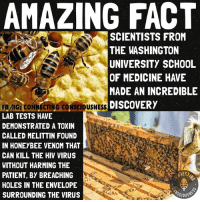 Life, Memes, and Precious: AMAZING FACT  SCIENTISTS FROM  THE WASHINGTON  UNIVERSITY SCHOOL  OF MEDICINE HAVE  MADE AN INCREDIBLE  FB/IG: CONNECTING CO  USNES DISCOVERY  LAB TESTS HAVE  DEMONSTRATED A TOXIN  CALLED MELITTIN FOUND  IN HONEYBEE VENOM THAT  CAN KILL THE HIV VIRUS  WITHOUT HARMING THE  PATIENT, BY BREACHING  HOLES IN THE ENVELOPE  SCIOUSS  SURROUNDING THE VIRUS 🐝 👌🏽 Reason number 9,777,888✅ to stop purchasing any gmo or pesticided products🚫, as you are inadvertently funding💵 the killing of our precious pollinators such as honeybees, native bees, moths🐛, butterflies🦋, bats🦇, birds🦅 and not to mention sea life🐋🦈🐬 which gets affected by the mass amount of run-off from spraying soils in these petro-agrochemical concoctions 🐝 We cannot count on our gluvvermint to protect these species, it's up to us.💯 spread awareness. Be the change you wish to see. 🐝 Don't forget, Dr. Sebi cured aids-HIV, cancers, diabetes (both types), sickle cell, anemia, psoriasis, arthritis, all types of cancers, blindness👀, and more. He was taken to Supreme Court over this, and won the case.:)