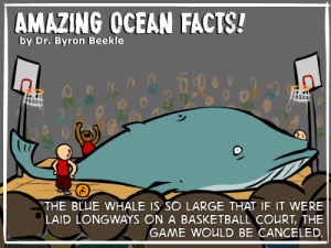 Basketball, Facts, and The Game: AMAZING OCEAN FACTS!  by Dr. Byron Beekle  292000  9  THE BLUE WHALE IS SO LARGE THAT IF IT WERE  LAID LONGWAYS ON A BASKETBALL COURT, THE  GAME WOULD BE CANCELED