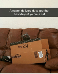 Amazon, Memes, and Best: Amazon delivery days are the  best days if you're a cat  uozewie