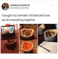 Follow @black.humorist for the funniest memes 😂: Amberly Dzimira  @Amberly Dzimira  i bought my hamster a lil bed and now  we do everything together Follow @black.humorist for the funniest memes 😂