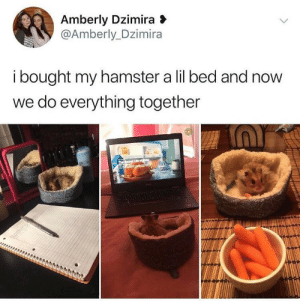 Best, Hamster, and Company: Amberly Dzimira  @Amberly_Dzimira  i bought my hamster a lil bed and now  we do everything together When your best bud keeps you company