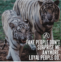 Hard to find loyal people now days... DOUBLE TAP AND TAG A LOYAL FRIEND!: AMBITION  FAKE PEOPLE DONT  SURPRISE ME  ANYMORE  LOYAL PEOPLE DO:  (A Hard to find loyal people now days... DOUBLE TAP AND TAG A LOYAL FRIEND!