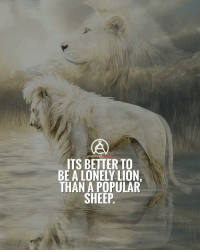 What would you rather be? Me personally a lonely lion 🦁💪: AMBITION  ITS BETTER TO  BE A LONELY LION.  THAN A POPULAR  SHEEP What would you rather be? Me personally a lonely lion 🦁💪