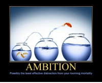 Ambition: AMBITION  Possibly the least effective distraction from your looming mortality Ambition