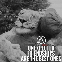 @ambitioncircle is one of my favorite pages on IG. They have epic motivational content. Make sure to follow them to stay motivated. 👉🏽@ambitioncircle 👉🏽@ambitioncircle: AMBITION  UNEXPECTED  FRIENDSHIPS  ARE THE BEST ONES @ambitioncircle is one of my favorite pages on IG. They have epic motivational content. Make sure to follow them to stay motivated. 👉🏽@ambitioncircle 👉🏽@ambitioncircle