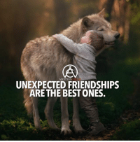 """Friends, Memes, and Best: AMBITION  UNEXPECTED FRIENDSHIPS  ARE THE BEST ONES Type """"Yes"""" if you agree 😊 - Tag your friends👇 - 